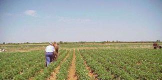 La Unió defèn que el sector agroalimentari no és el major responsable de les emissions a l'atmosfera