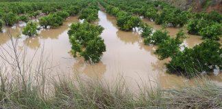 Els cítrics, els cultius més afectats per la gota freda de setembre, amb més de 60 milions en desperfectes