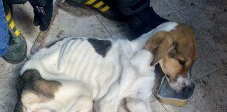 La Policia de la Generalitat deté a una persona per maltractar a dos gossos a Castelló
